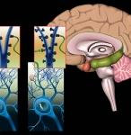Depression Brain Page