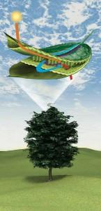 How a Leaf Works